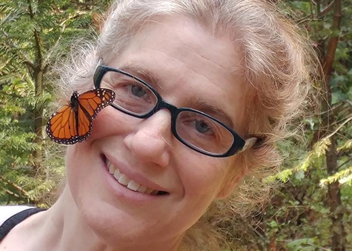 Serious Declines in Butterflies Revealed in Extensive North