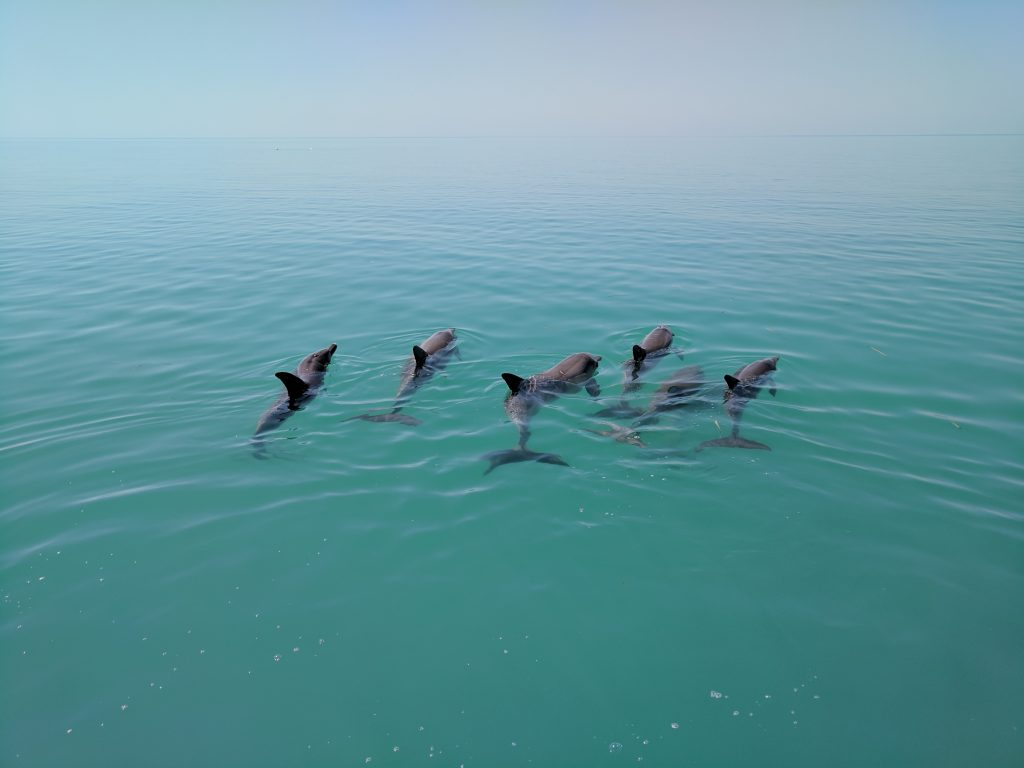 group of 6 dolphins swims away