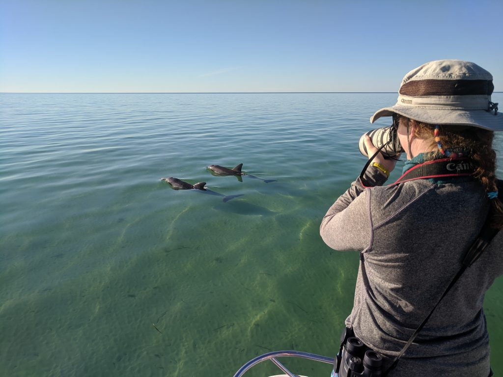 Researchers photographing dolphins as they swim by